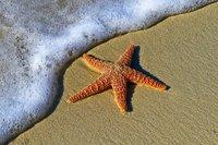 Estrella arcano mayor tarot